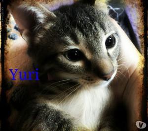 Yuri gattino in adozione
