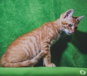 Munch gattino rosso in regalo