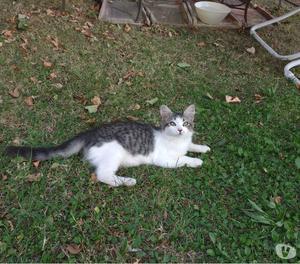 Regalo Affettuosa gattina di 3 mesi