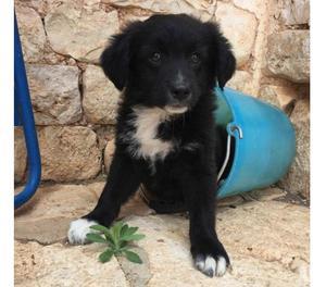 GHIBLI, cucciolo, cerca una casa e una famiglia per sempre