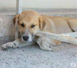 SESAMO, cucciolo, cerca una casa e una famiglia per sempre