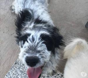 Charlie, cucciolo affettuoso, è in CANILE, cerca CASA!