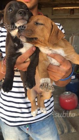 Regalo cuccioli di 2 mesi