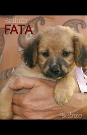Fata cucciola in adozione