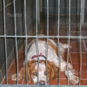 Full: urge adozione per salvarlo