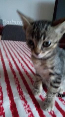 Gattini 2 e gatta 1 per ad amanti animali
