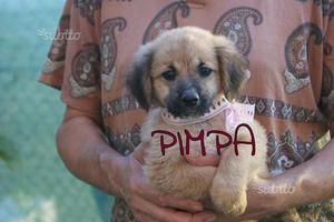 Pimpa cucciola in adozione