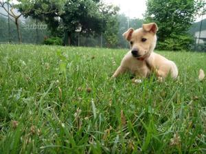 Regalo cucciolo di cane taglia piccola