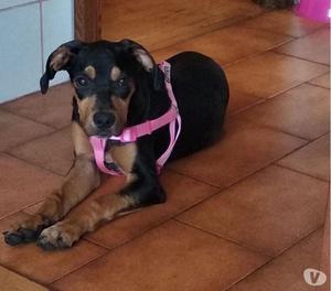 Stupenda cucciola di 5 mesi e mezzo in adozione