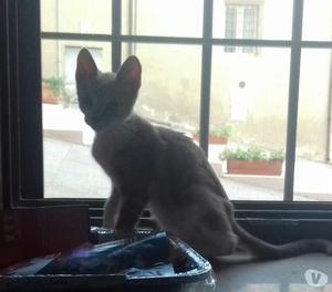 Regalo gattino adorabile