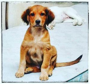 Ettore ha 3 mesi e mezzo