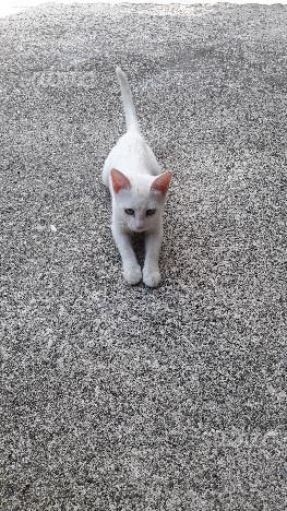 Regalo gattino bianco
