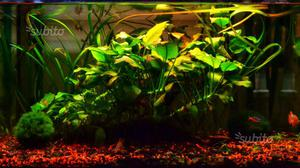 Acquario aquatlantis posot class for Arredo acquario acqua dolce