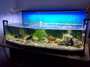 Acquario 150 x 45 x 55 cm posot class for Acquario tartarughe completo