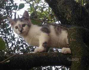 Gattina Artemisia 3 mesi