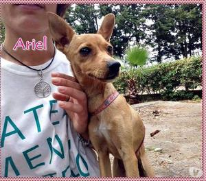 Ariel, pinscher 6 mesi adozione