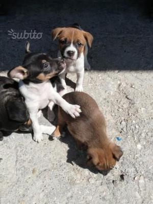 Regalo cuccioli di meticcio