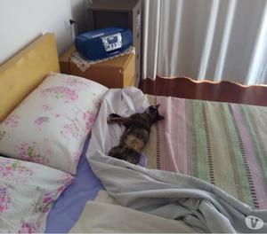 Regalasi bellissima gattina
