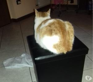 Abbiamo smarrito un gatto maschio di 6 nni