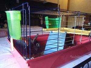 Coniglietti nani con gabbia
