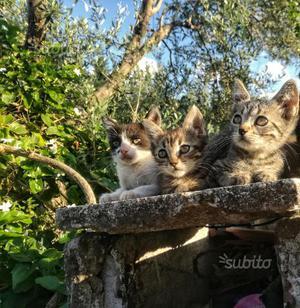 Regalo Gattini Di tutti I Colori Super Svezzati