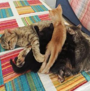 Regalo meravigliosi gattini