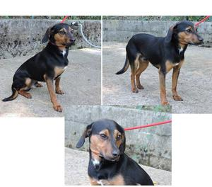 MATTEO 1-2anni cane fantasia buono e dolce ! 10kg