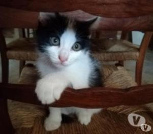 Regalo tre splendidi gattini di quattro mesi