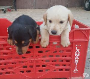 Regalasi cuccioli di circa 2 mesi