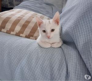 Neve, gattino di 3 mesi dolcissimo aspetta una famiglia