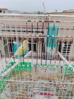 Canarini  maschi e femmine 10 euro