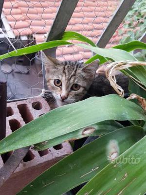 Regalasi gattina di appena 2 mesi di vita