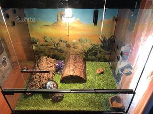 Teca per rettili in vetro