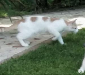 Smarrito gattino maschio