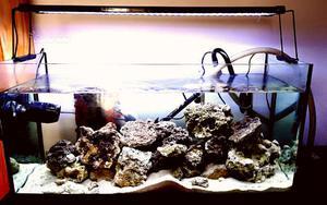 Acquario marino con rocce vive