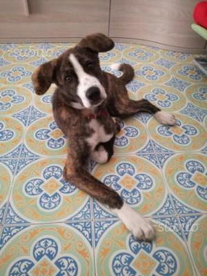 Regalo cucciolo di 5 mesi
