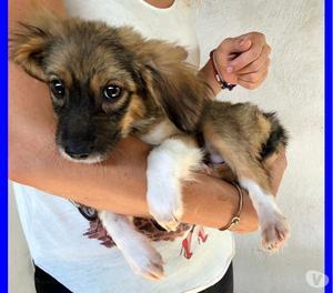 LIBBY cucciolina 3 mesi simil volpina mollata fuori dal cani