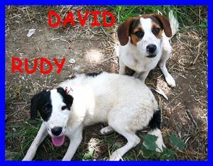 RUDY E DAVID CUCCIOLI 6 MESI