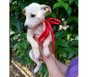 Cucciolo bianco 5 mesi MORGAN, tenero