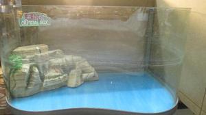 Vasca per tartarughe di acqua posot class for Filtro vasca tartarughe