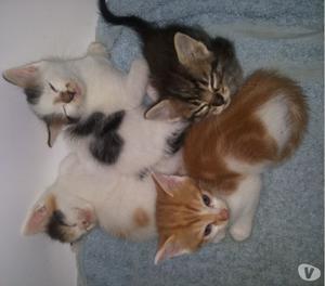 Ciao regalo gattini bellissimi