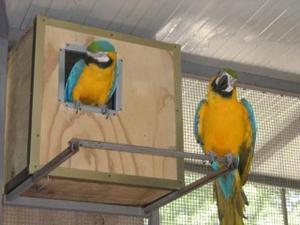Coppie di pappagalli sicure con gabbie idi