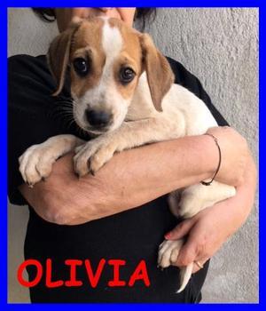 OLIVIA CUCCIOLA 3 MESI