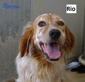 RIO SIMIL SETTER BIANCO ARANCIO