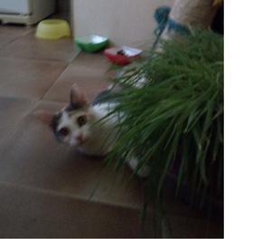 SOS: Regalo splendida gattina tricolore di cinque mesi