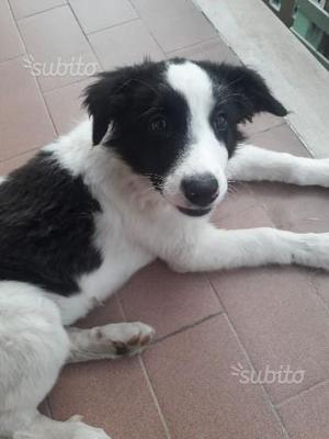 Cucciolo maschio di 3 mesi in adozione