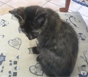 Gattina bellissima