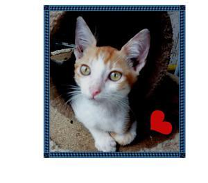 Regalo gattino bianco e rosso