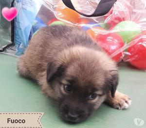 FUOCO CUCCIOLO 2 MESI