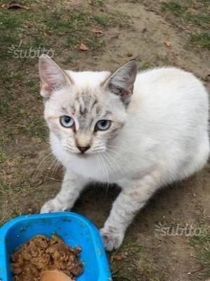 Regalo Magda, gattina di 5 mesi